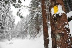 Pista de senderismo en invierno Imagen de archivo libre de regalías
