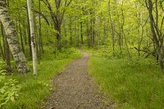 Pista de senderismo en las maderas Imagen de archivo libre de regalías