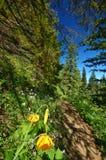 Pista de senderismo en las montañas Fotografía de archivo libre de regalías