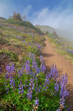 Pista de senderismo en las montañas imagenes de archivo