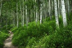 Pista de senderismo en las montañas rocosas de Colorado fotografía de archivo libre de regalías