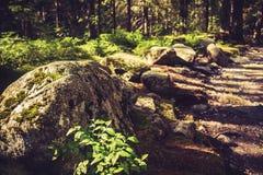 Pista de senderismo en las monta?as fotos de archivo libres de regalías