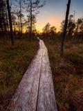 Pista de senderismo en Selisoo, Estonia Fotos de archivo libres de regalías