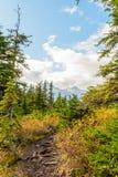 Pista de senderismo en Skagway, Alaska foto de archivo