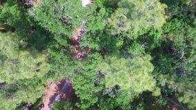 Pista de senderismo en un bosque almacen de metraje de vídeo