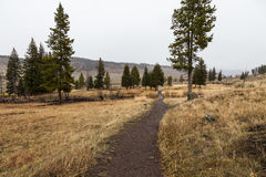Pista de senderismo en Yellowstone Imagenes de archivo