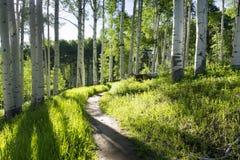 Pista de senderismo hermosa de la montaña a través de Aspen Trees de Vail Colorado Foto de archivo