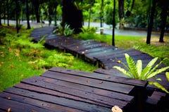 Pista de senderismo mojada en parque tropical Imagenes de archivo