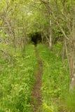 Pista de senderismo muy rústica y aislada en bosque Foto de archivo libre de regalías