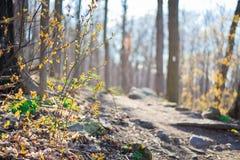 Pista de senderismo por una tarde caliente de la primavera Fotografía de archivo