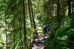 Pista de senderismo a través del bosque con dos personas fotos de archivo