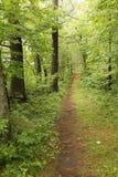 Pista de senderismo a través del gobernador Knowles State Forest, Wisconsin Imagenes de archivo
