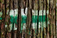 Pista de senderismo verde pintada en la corteza de árbol Foto de archivo