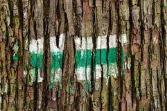 Pista de senderismo verde pintada en la corteza de árbol Imágenes de archivo libres de regalías