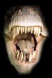 Pista de T-rex imágenes de archivo libres de regalías