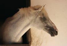 Pista de un caballo Imágenes de archivo libres de regalías