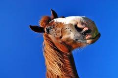 Pista de un caballo Fotos de archivo libres de regalías