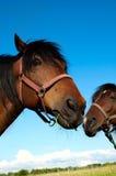 Pista de un caballo Imagen de archivo