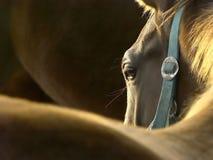 Pista de un caballo en la puesta del sol Fotos de archivo