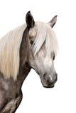 Pista de un caballo gris Imágenes de archivo libres de regalías
