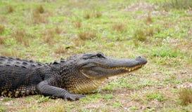 Pista de un cocodrilo Fotografía de archivo libre de regalías