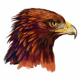 Pista del águila Imágenes de archivo libres de regalías