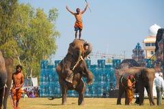 Pista del amaestrador de las piernas traseras del elefante Imagen de archivo libre de regalías