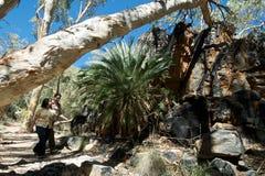 Pista del arbusto de los pares que recorre Foto de archivo libre de regalías