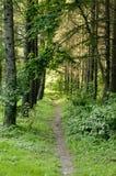 Pista del bosque Imagen de archivo