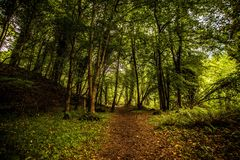 Pista del bosque Foto de archivo