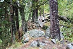 Pista del bosque de la montaña a la garganta Shkhelda Imagen de archivo
