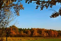 Pista del bosque en colores del otoño Fotografía de archivo libre de regalías