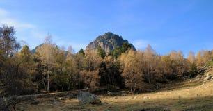 Pista del bosque y la vista de la montaña en la parte posterior imágenes de archivo libres de regalías