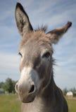 Pista del burro Imagen de archivo libre de regalías