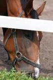 Pista del caballo Imágenes de archivo libres de regalías