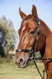 Pista del caballo Imagen de archivo libre de regalías