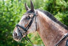 Pista del caballo marrón-blanco Imagen de archivo libre de regalías