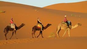 Pista del cammello in deserto Fotografia Stock