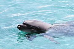 Pista del delfín Fotografía de archivo libre de regalías