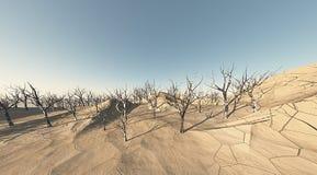 Pista del desierto con los árboles muertos Foto de archivo