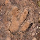Pista del dinosaurio Imagen de archivo libre de regalías