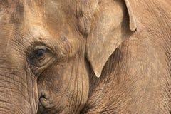 Pista del elefante Foto de archivo