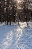 Pista del esquí en bosque del invierno Fotos de archivo