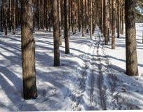 Pista del esquí en bosque del pino Imagen de archivo