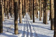 Pista del esquí en bosque del pino Imágenes de archivo libres de regalías