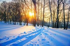 Pista del esquí en bosque del invierno Fotos de archivo libres de regalías