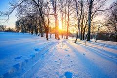 Pista del esquí en bosque del invierno Fotografía de archivo