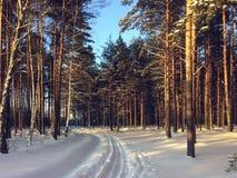 Pista del esquí en bosque del invierno Imagenes de archivo