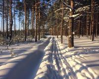 Pista del esquí en bosque del invierno Foto de archivo