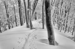 Pista del esquí en bosque nevoso misterioso Imagen de archivo libre de regalías